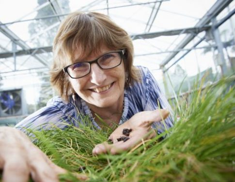 Forage Science